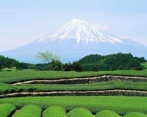 Year 12 Japanese